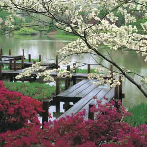 japanese-garden-jjennings-design